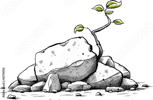 Fotografia A fresh, cartoon sapling with green leaves grows from a pile of small jagged rocks