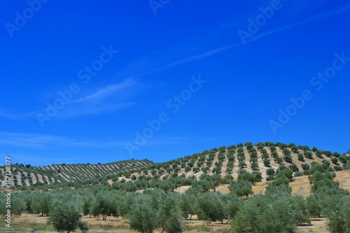 Olive grove landscapes of Andalusia