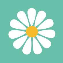 Daisy Flower Isolated On Backg...