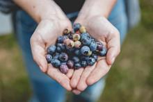 Girl Holding Freshly Picked Blueberries 2