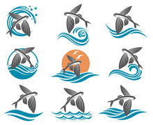 Collection Of Flying Fish Imag...