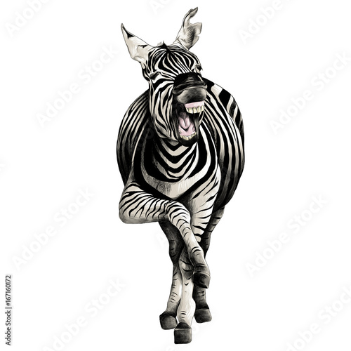 Tuinposter Zebra Zebra full height smiling sketch vector graphics color picture