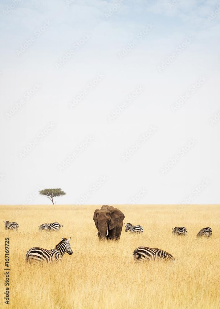 Zebra and Elephants in Kenya - Vertical
