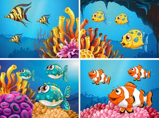 Fototapeta na wymiar Fish swim under the ocean