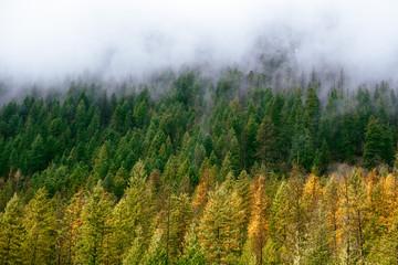 Panel Szklany Krajobraz Autumn Colours and Fog