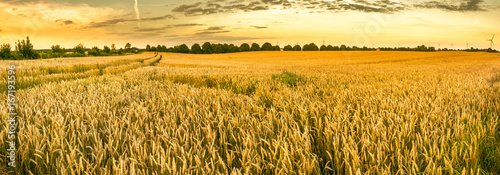 Leinwand Poster Golden wheat field and sunset sky, landscape of agricultural grain crops in harv