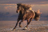 Fototapeta Konie - Running horse with streamed mane on sunset sandy beach