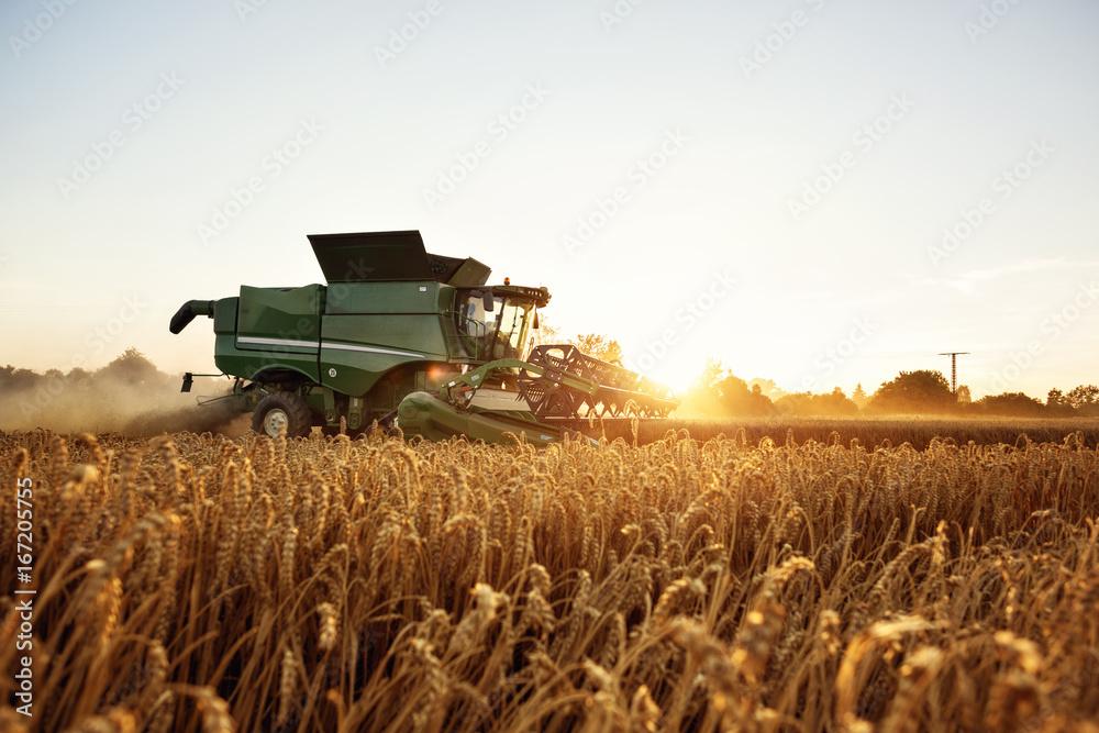 Fototapety, obrazy: Mähdrescher bei der Ernte auf dem Weizenfeld