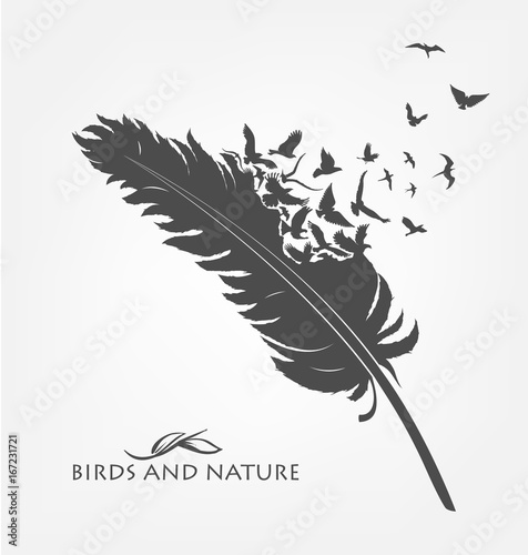 feather with flying flock of birds
