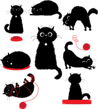 Black Kitty Playing