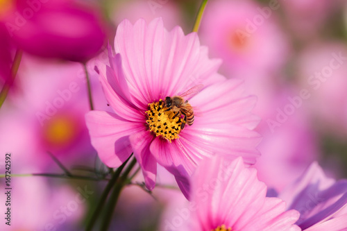Staande foto Roze Colorful flower in the garden with sunlight and nature blurred in background.