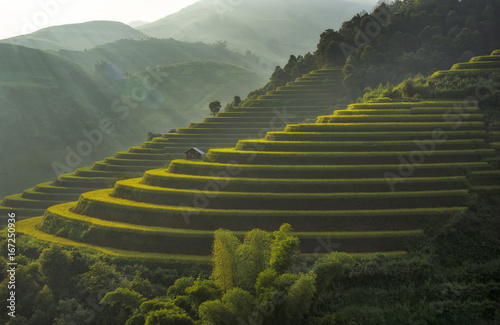 Fotobehang Rijstvelden Terraced rice field landscape of Mu Cang Chai, Yenbai, Northern Vietnam