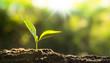 Leinwandbild Motiv Close up Young plant growing over green background