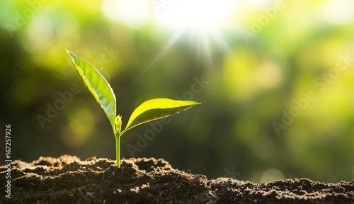 Fotoposter Planten Close up Young plant growing over green background