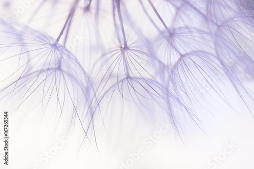 Dandelion seeds closeup in delicate shades.Selective focus