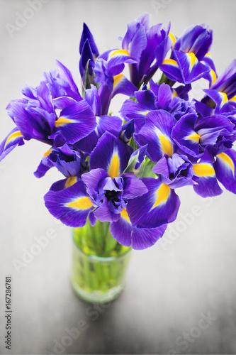 Foto op Canvas Iris Iris flower on the gray background.