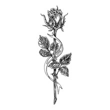 Sketch Tattoo. Rose On A Long ...