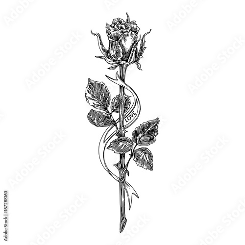 Sketch Tattoo Rose On A Long Stem And Ribbon Black And White