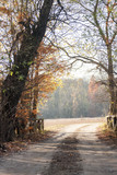Autumn landscape with autumn leaves and moody light