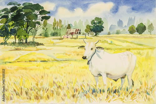 Fotobehang Zwavel geel Watercolor landscape painting colorful of rice fird and cow