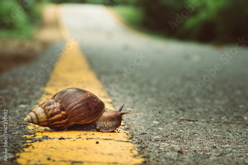 Photo Snail crosses the yellow line on street,  Business and finance concept , success