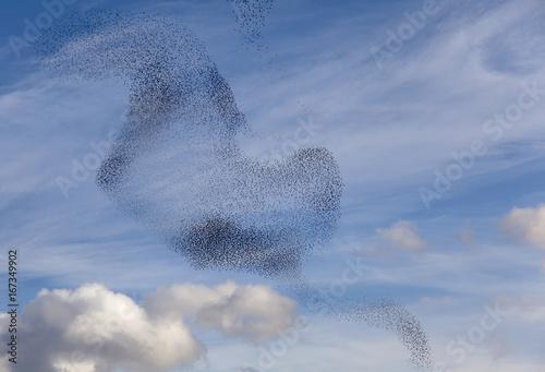 Fotografía  Tanz der Vögel