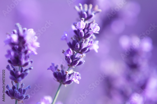 close up shot of lavender flowers