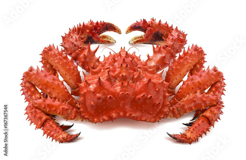 Red brown king crab 2 isolated on white background