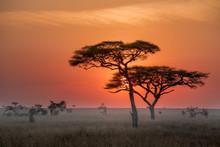 Time To Sunrise At Serengiti N...