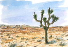 Desert Landscape With Joshua T...