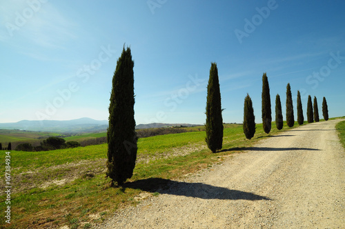 Fotobehang Toscane Beautiful Tuscany Landscape with Cypress in Spring Season near Pienza (Siena). Italy