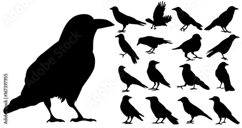 Canvas Print Vector, isolated silhouette of crows, crow, bird, set