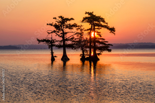 Foto  Scenic sunrise and egret, Reelfoot Lake, Tennessee