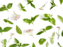 Green Basil Leaves On White Background. Basil Pattern. Floral And Plants On White Background. Top View, Flat Lay. Flower Pattern.