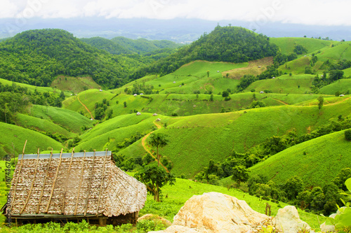 Poster Lime groen Soybean field ripening on mountain and stone, agricultural landscape.