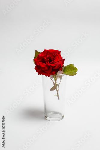 Tuinposter Gerbera Rose in a glass