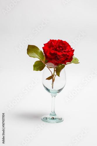 Tuinposter Gerbera Rose in an empty wine glass