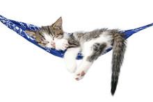 Little Kitten Sleeps On A Hamm...