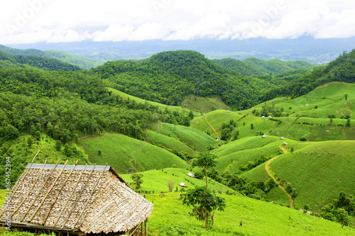Tuinposter Lime groen Soybean field ripening on mountain and stone, agricultural landscape