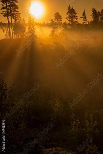 Poster Cerf Forest sunrise