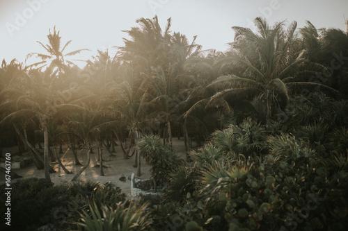 In de dag Centraal-Amerika Landen Green palms in sunlight