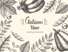 """Vintage Autumn Background With Hand Drawn Leaves And Pumpkin. Hand Written Trendy Quote 'Autumn Time"""". Sketch. Hand Made Lettering. Banner, Flyer, Brochure. Advertising"""