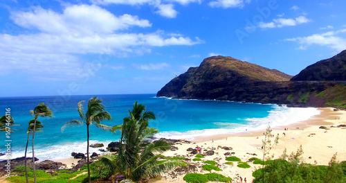 Canvas Prints Tropical beach Palm Trees on Sandy Tropical Beach with Beachgoers and Blue Water Bay - Oahu, Hawaii