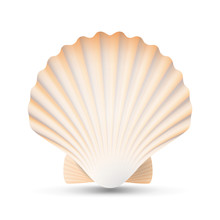 Scallop Seashell Vector. Beaut...