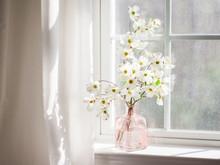 Dogwood Blossoms In Window Light