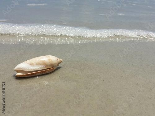Photo Stands Zen Seashell on the beach