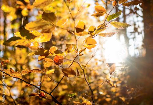 Foto op Plexiglas Landschappen herbstlihces Geäst wird von der Abendsonne geküsst,