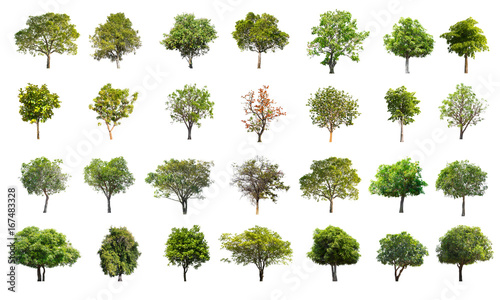Fotografia, Obraz  Collection of Tree isolated on a white background, Can be used for part assembly to your designs or images