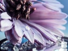 Diamond On A Petal Of A Purple...