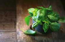 Fresh Basil Leaves In A Bowl On Dark Rustic Wooden Table